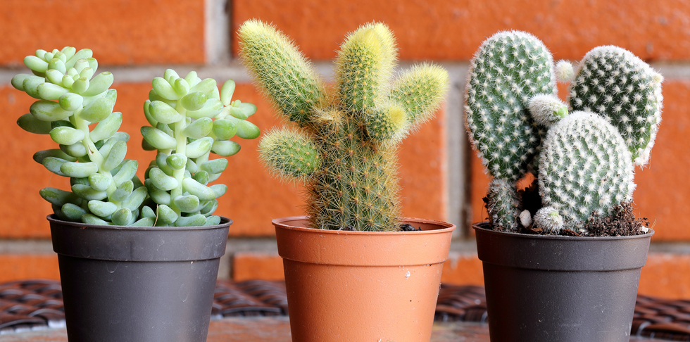 How to Keep Your Succulents and Terrariums Alive