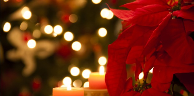 Christmas home decoration with poinsettia flower and candles in foreground and tree lights in background