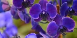 05_15_Produce_KS_Flowers_Image 1
