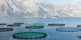 08_ 14_ML_Aquaculture_header
