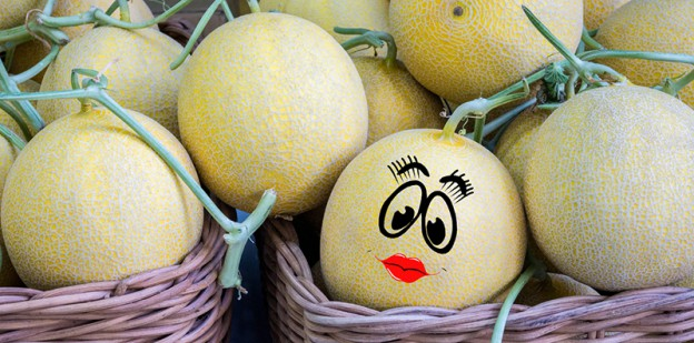 Yellow Cantaloupe melons