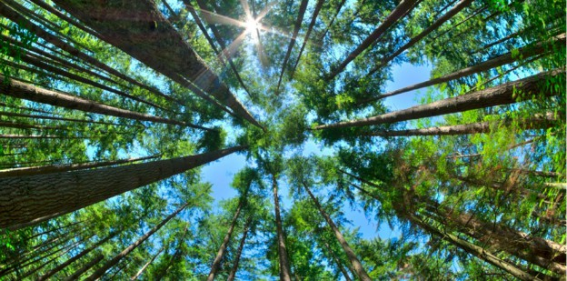 09_AH_Trees_Header_Image