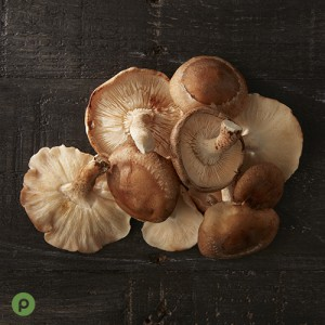 04_CC_Mushrooms_Shiitake