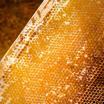 Uncapped honeycomb with the  honey