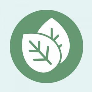 Publix Wellness Leaf Icon