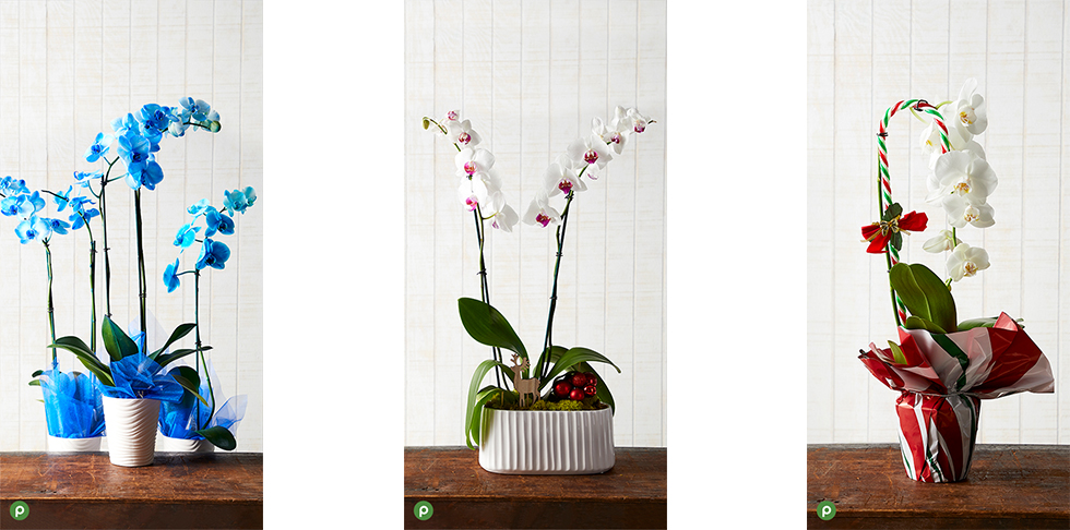 Publix Holiday Orchid