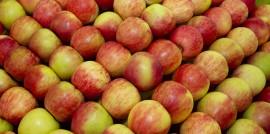 Hybrid Apples
