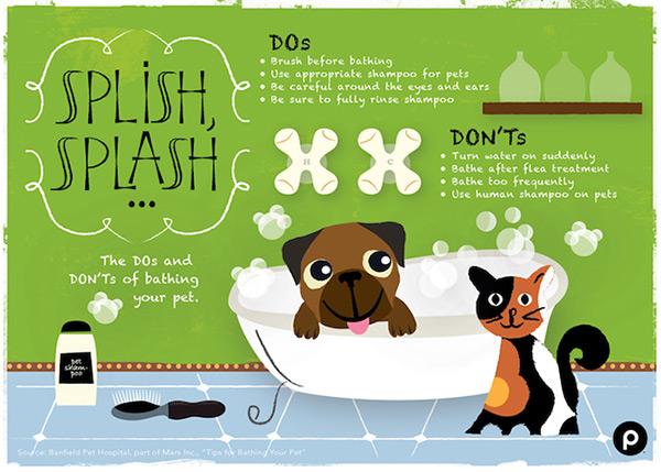 Pet Bath Infographic