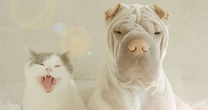 Pet Tips Hygiene - Dog and Cat