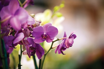 Floral_Orchids_Body