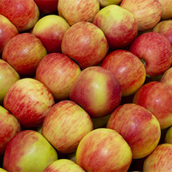 All About Hybrid Apples