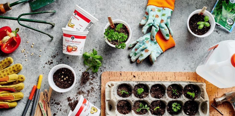Tips for Starting a Produce Garden at Home