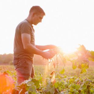6 Healthy Fall Fruits & Veggies