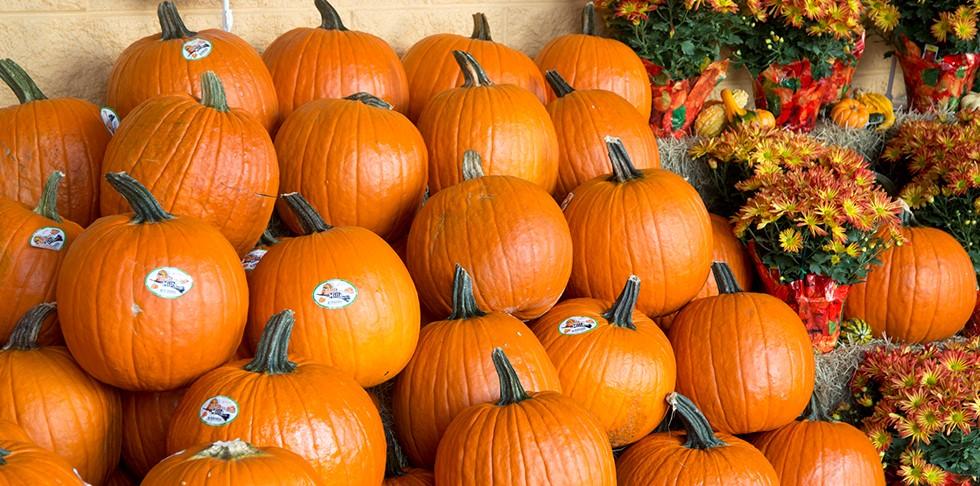 At Season's Peak: Pumpkins